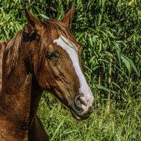 Портрет лошади. :: Валерий Изотов