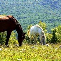 Лошадки в Кодорском ущелье :: Денис Кораблёв