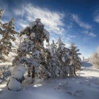 Деревянные богатыри. :: Виктор Гришенков