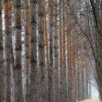 Прощай осень :: антон маскаев