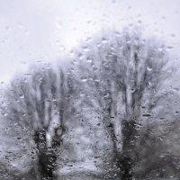 Осенние дожди.. :: Svetlana Kravchenko