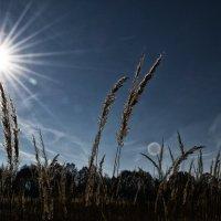 Соллнце :: Амиран Сохашвили