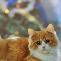Ждём новый год) :: Анжелика Веретенникова