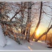Утренний свет :: Мария Кухта