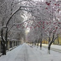 Контрасты начала зимы :: Владимир Звягин