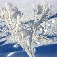 Зима рисует.... :: Павлова Татьяна Павлова