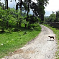 В Абхазии :: ВладиМер