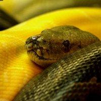 Три змеи :: Елена Усова