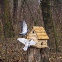 Птичий домик :: Aнна Зарубина