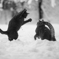 МАЛЬЧИШКИ!(ПУШОК,МИШКА И ПЕРВЫЙ СНЕГ) :: ОЛЕГ КАРАУЛОВСКИЙ