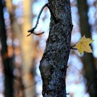 Первая  осень листика.... :: Валерия  Полещикова