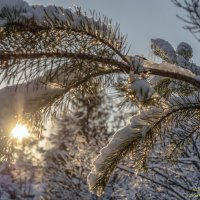 «Чародейкою Зимою, околдован, лес стоит ...»* :: Valeriy Piterskiy