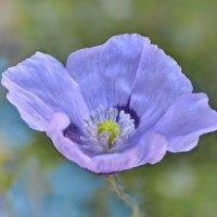 Цветок :: Николай Ярёменко
