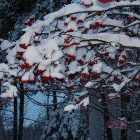 Утро после снегопада. :: Наталья Золотых-Сибирская
