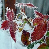 Зимние листья :: Петр Заровнев