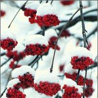 Зима в Клину :: Дмитрий