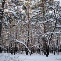 Зимняя графика :: nika555nika Ирина