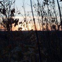 На закате дня :: Мария Букина