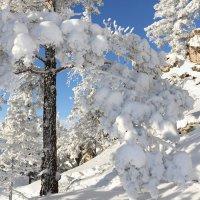 В снежном уборе :: Мария Кухта