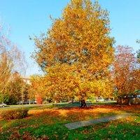 Осень рядом :: Люша