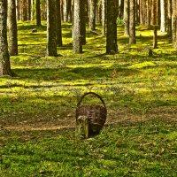 в лесу :: Елена