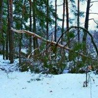 Прогулка выходного дня вчера, после циклона... :: Александр Резуненко