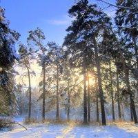 Утром солнышко встаёт . :: Мила Бовкун