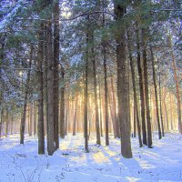 В Бердском лесу . :: Мила Бовкун