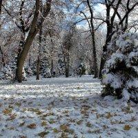 Первый снег :: Сергей Мурзин
