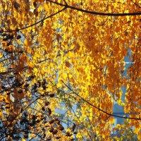 золотая осень :: prokyl