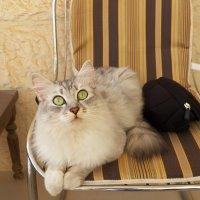А вылетит ли птичка?!:) :: Жанна Мааита