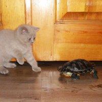 Котик Ясон и черепах Винтик :: Galina Belugina