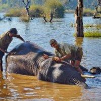 Банный день у слонов :: Demian