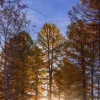 Осень в контровом свете :: Евгения