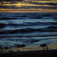 ворона на финском заливе :: Iuliia Efremova