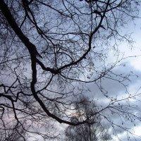 Декабрьское небо и другое :: Андрей Лукьянов
