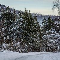 fir-tree :: Марк Додонов