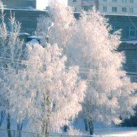 Мороз и солнце :: Татьяна ***