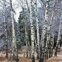 Лесным туманом лёг на травы иней... :: Лесо-Вед (Баранов)