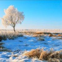 Во поле берёза стояла... © :: Александр Никитинский