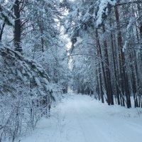 Дорога в лес :: Владимир Звягин