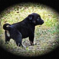 Маленький щенок в большом мире :: Валентина *