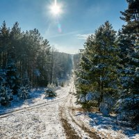 Зимний день :: Михаил Архипов