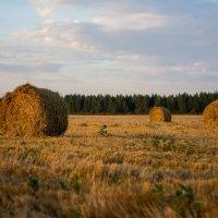 пейзаж :: Ольга Энговатова