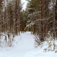 Дорога в лес :: Галина Новинская