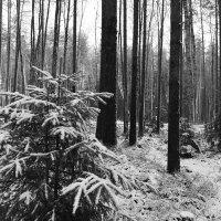 Первый снег. :: Igor Konstantinov