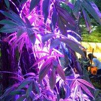 Тропические растения в оранжерее :: Ростислав