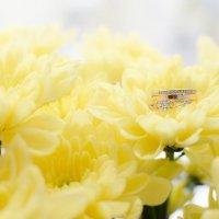 143 Нежный хризантемы :: Mirriliem Ulianova