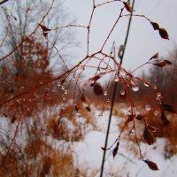 Снег идет и тает. :: Татьяна ❁