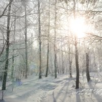 Зимнее солнце :: Алена Булдина